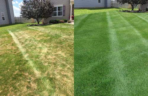 Before and after core aeration and overseeding