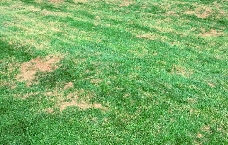 Home And Garden Lawn Care How To Treat Lawn Fungus Fungicides