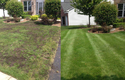 Lawn renovation services