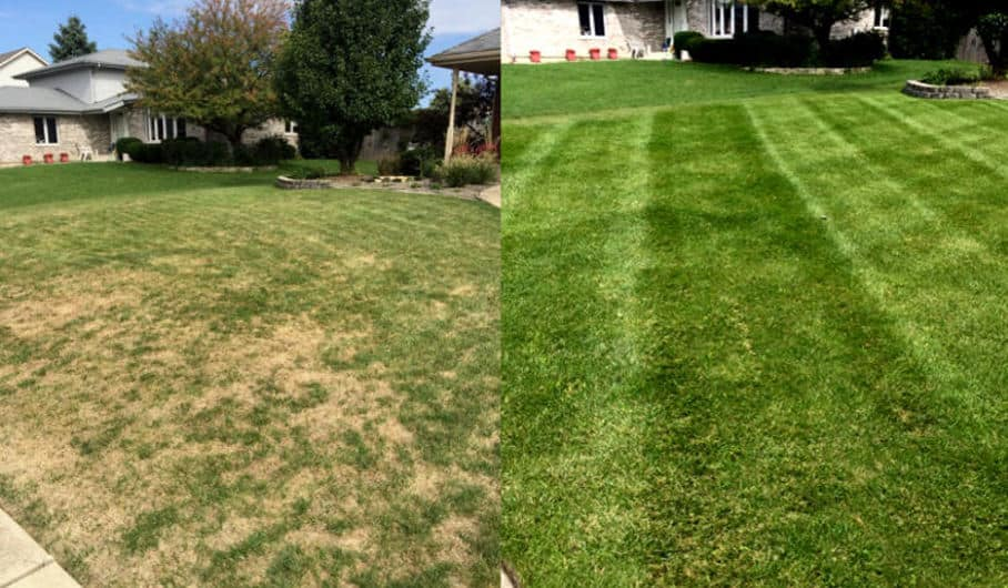 Lawn top dressing with compost - before and after picture