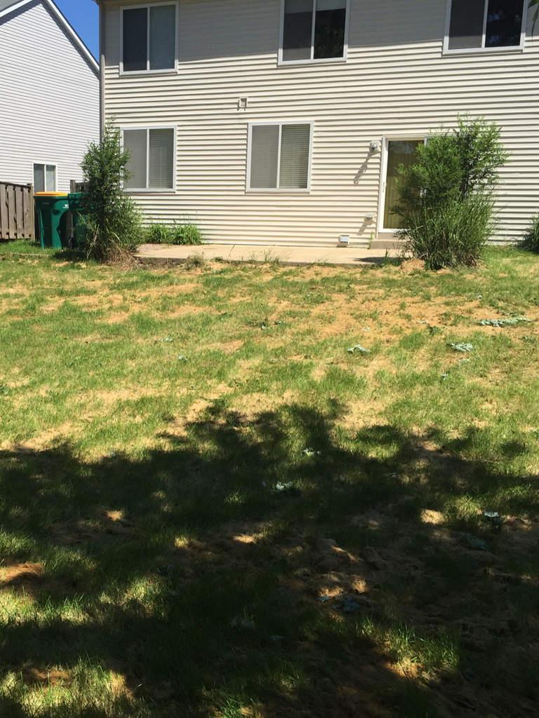 Lawn damage by lawn fungal disease.