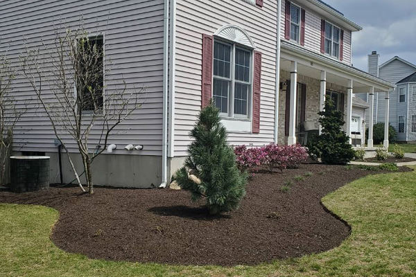 brown mulch installation in front lawn.