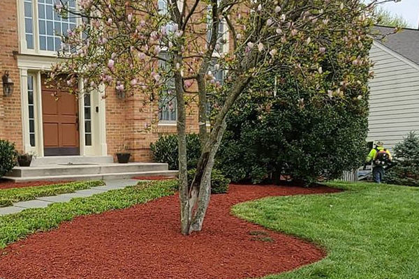 Red mulch installation in front lawn.